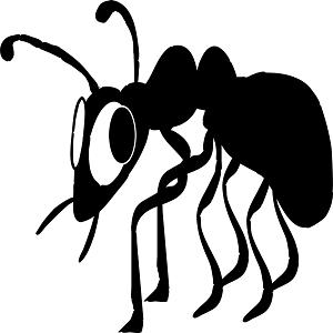 termites geelong